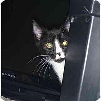 Adopt A Pet :: Crouton - San Ramon, CA