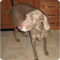 Adopt A Pet :: Mia - Eustis, FL