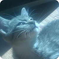 Adopt A Pet :: Annie - Harriman, NY