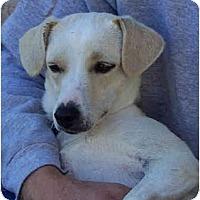 Adopt A Pet :: MOM - Phoenix, AZ