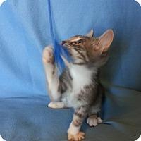 Adopt A Pet :: Sirena - Centralia, WA
