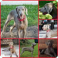 Adopt A Pet :: ASA - Inverness, FL