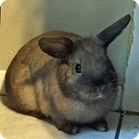 Adopt A Pet :: BunBun - Williston, FL