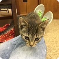 Adopt A Pet :: Rose - Medina, OH