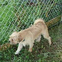 Terrier (Unknown Type, Medium) Dog for adoption in Columbia, Kentucky - Winston