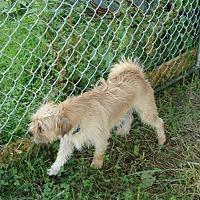 Adopt A Pet :: Winston - Columbia, KY