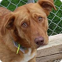 Adopt A Pet :: Hero - Clear Lake, IA