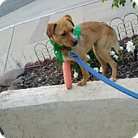 Adopt A Pet :: Pasta - San Diego, CA