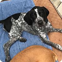 Adopt A Pet :: Laney - Winchester, VA
