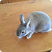 Adopt A Pet :: Bugzy - Maple Shade, NJ