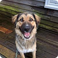 Adopt A Pet :: Honor-Gives hugs! Foster/Adopt - Kirkland, WA