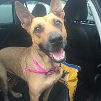 Adopt A Pet :: Daphne - Waggaman, LA