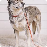 Adopt A Pet :: Macho - Portland, OR