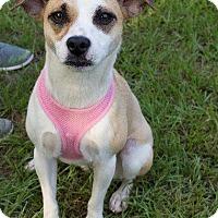 Adopt A Pet :: Mya - Darien, GA