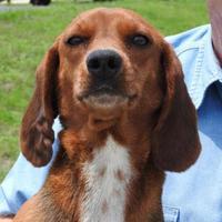 Adopt A Pet :: Tiffany - Gainesville, FL