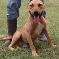 Adopt A Pet :: Tyson - Dublin, GA