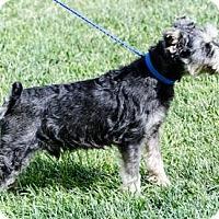 Adopt A Pet :: Nixon - Renton, WA