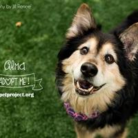 Adopt A Pet :: Alma - Kansas City, MO