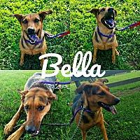 Adopt A Pet :: Bella - Unionville, PA