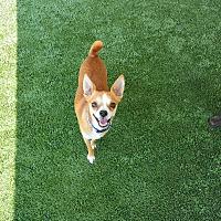 Mixed Breed (Small) Mix Dog for adoption in Meridian, Idaho - Marshall