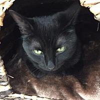 Adopt A Pet :: Lily - Alexandria, VA