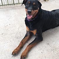 Adopt A Pet :: Jerry - Gilbert, AZ