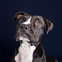 Adopt A Pet :: Cubert - Decatur, GA