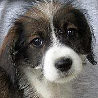 Adopt A Pet :: Hyden - Germantown, MD