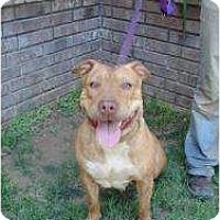 Adopt A Pet :: Karlee - Medicine Hat, AB