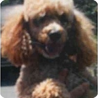 Adopt A Pet :: Harley - Kingsburg, CA