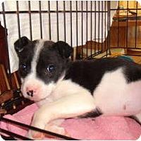 Adopt A Pet :: Mattie - Russellville, AR