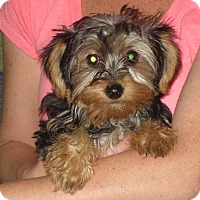 Adopt A Pet :: Ingrid - Salem, NH