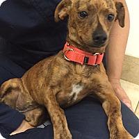 Adopt A Pet :: Betty - Mission Viejo, CA