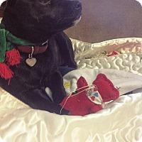 Adopt A Pet :: Babs - Marietta, GA