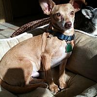 Adopt A Pet :: Bentley - Inman, SC