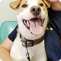 Adopt A Pet :: Jake - Adoption Pending! - Hillsboro, IL
