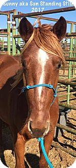 Mustang Mix for adoption in Lancaster, California - Sun Standing Still aka Sunny
