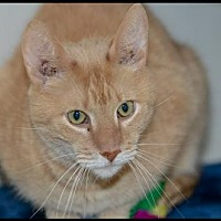 Adopt A Pet :: Butch - Brick, NJ
