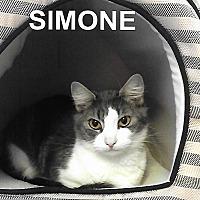 Adopt A Pet :: Simone - Medway, MA
