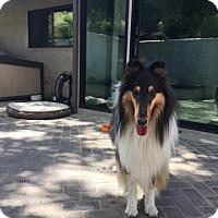 Adopt A Pet :: Cooper - Trabuco Canyon, CA