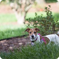 Adopt A Pet :: Anna - Gainesville, FL