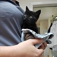 Adopt A Pet :: Marty $75 - Seneca, SC