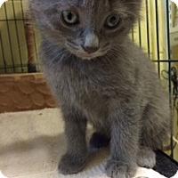 Adopt A Pet :: May (KG) - Trenton, NJ