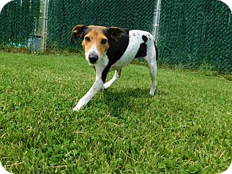 Beagle Mix Dog for adoption in Lafayette, New Jersey - Tink