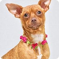 Adopt A Pet :: Rosie - Dublin, CA
