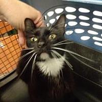 Adopt A Pet :: Panda - St Augustine, FL