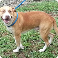 Adopt A Pet :: Brody - Colonial Heights, VA