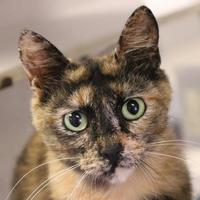 Adopt A Pet :: Kanga - Austin, TX