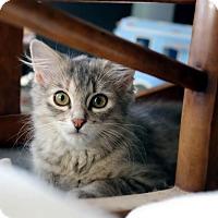 Adopt A Pet :: Opal - Hinton, OK