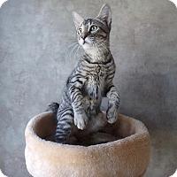 Adopt A Pet :: Herbie - Seguin, TX